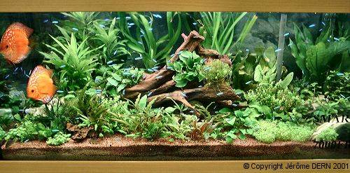 Aquafish Journal De Linstallation Dun Aquarium Par Greg